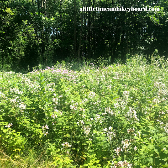 Wildflowers filled sections of Schlitz Audubon Nature Center
