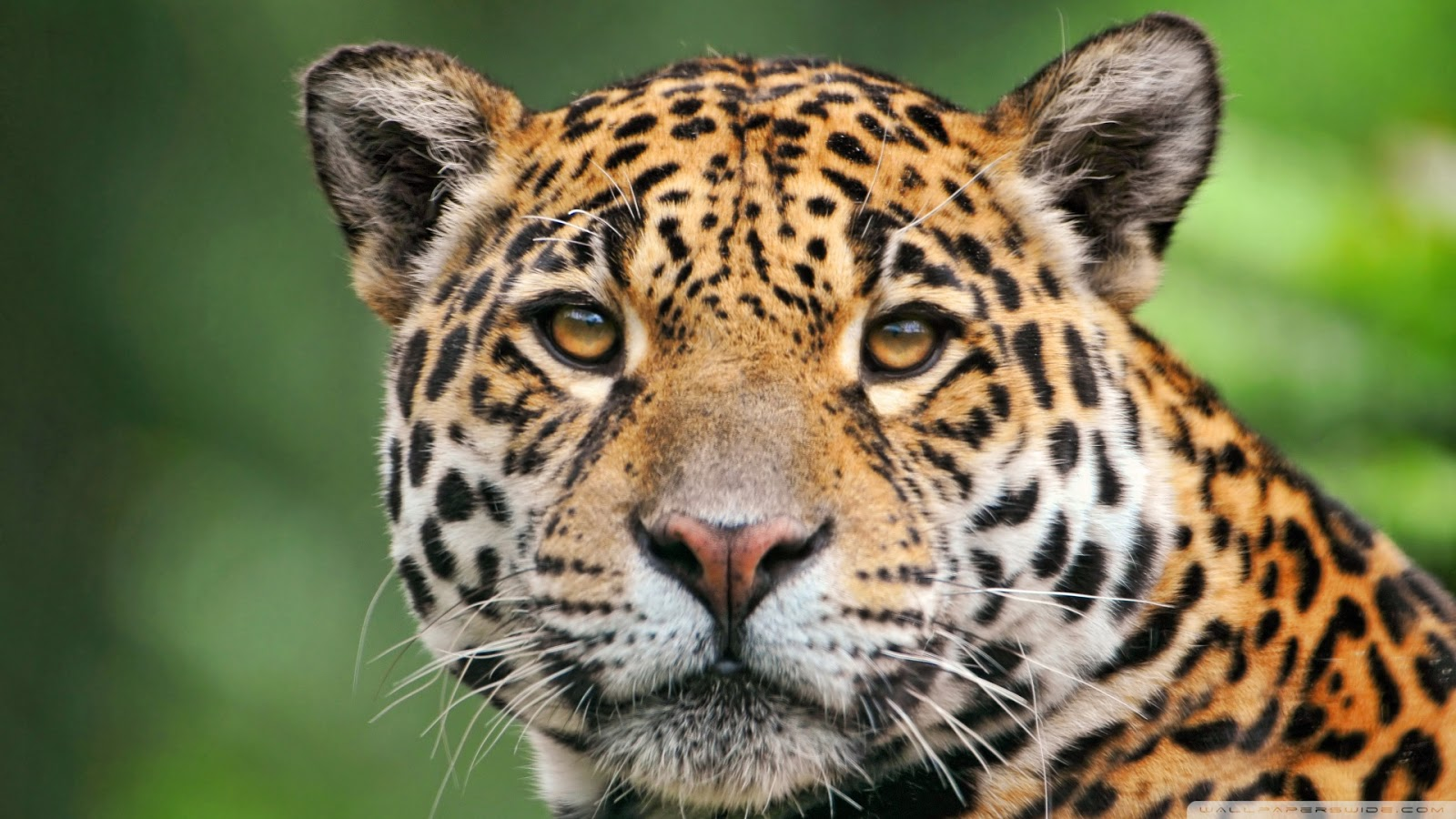 Animals Wallpaper 3d Hd 2 0 Apk Download: Free 3D Wallpapers Download: Aanimal Wallpapers, Animal Hd