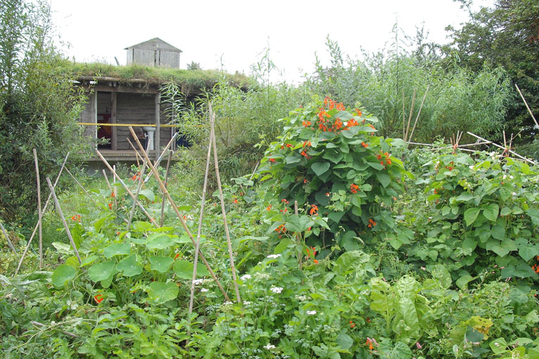 The Gardening Apprentice: Practical Permaculture in Britain