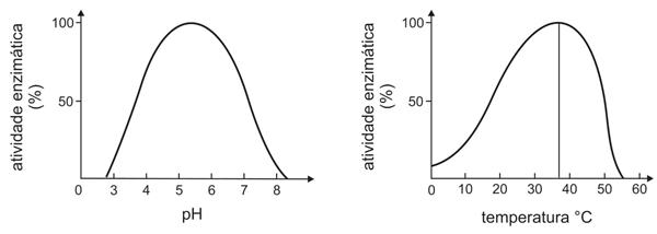 atividade enzimática