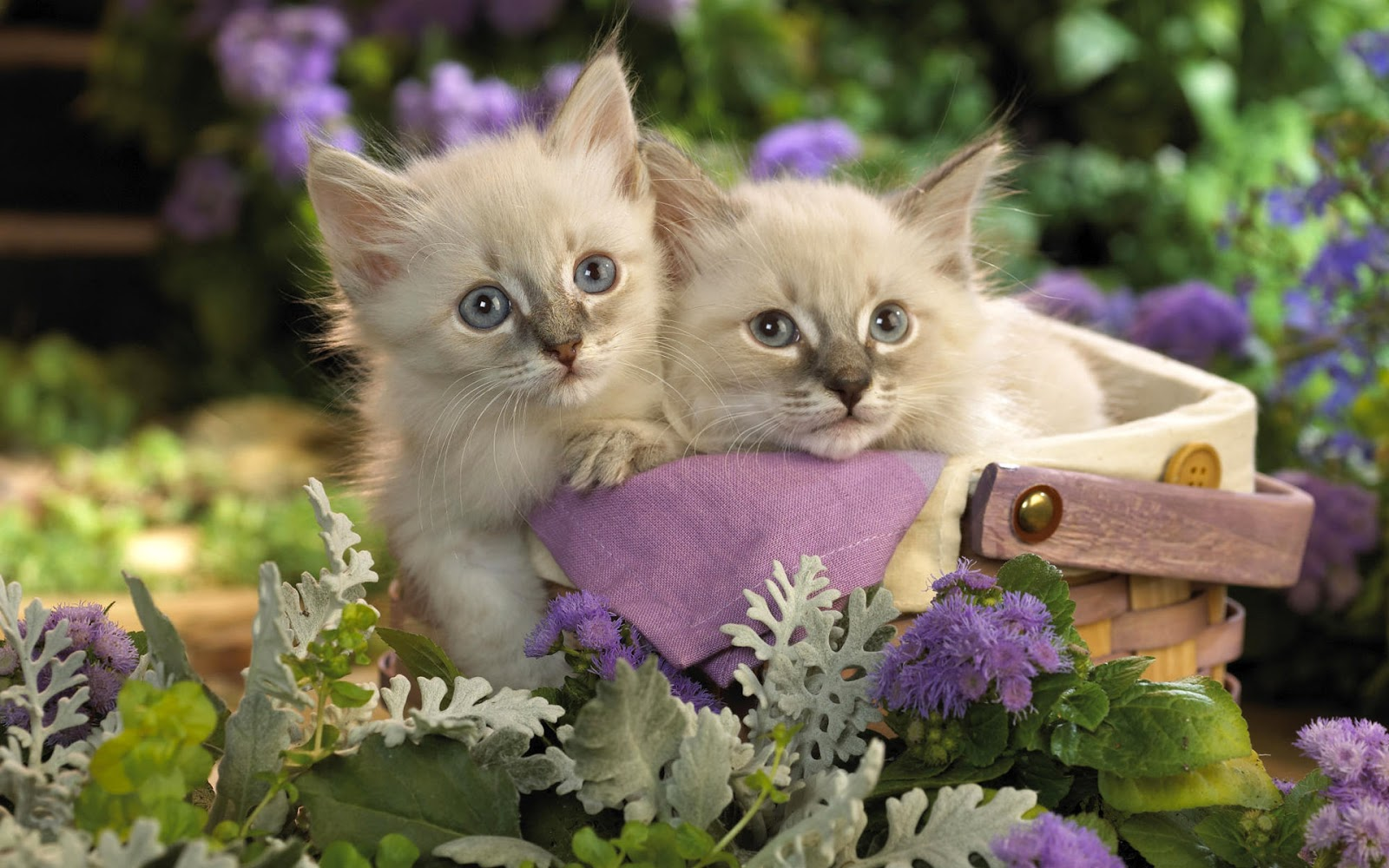 Lovely wallpapers cute animals wallpapers 2012 - Kitten wallpaper hd ...