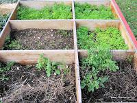 Δεκέμβριος στο αγρόκτημα. Τι φυτεύουμε, καλλιεργούμε και τρώμε τον Δεκέμβριο