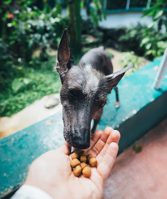 A hand holds out dog food for a dog to eat