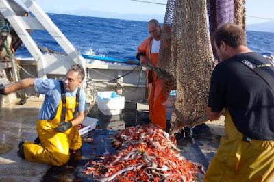 www.pescaturismomallorca.com pesca