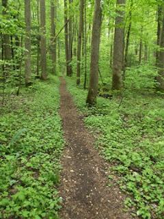 Trillium Gap Trail Temporarily Closed Due to Trail Conditions