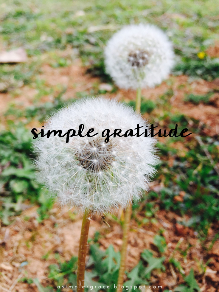 Simple Gratitude | 28 - A Simpler Grace - A weekly series focusing on practicing gratitude.  #gratefulheart #gratitude #feelingthankful