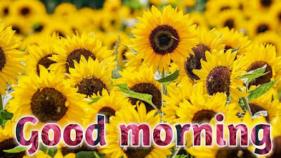 good morning images with flowers good morning Rose images