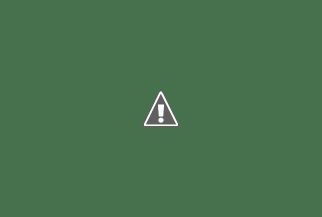 Брисбен, Квинсленд, Австралия - Огненное дерево или Делоникс королевский