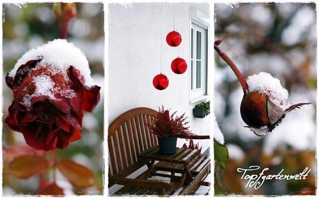 Gartenblog Topfgartenwelt Winter: Rose mit Schnee Weihnachtsdeko über Gartenbank