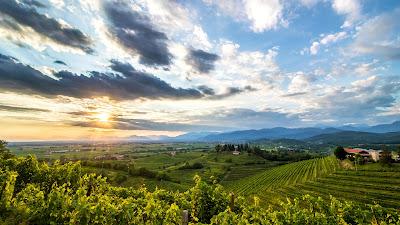 Friuli Colli Orientali doc vino