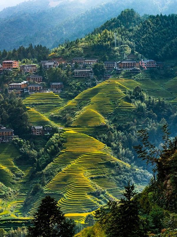 นาขั้นบันไดหลงจี๋ (Longji Rice Terraces: 龙脊梯田)
