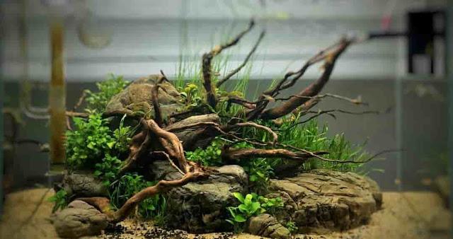 10 Jenis Kayu Yang Cocok Untuk Aquascape