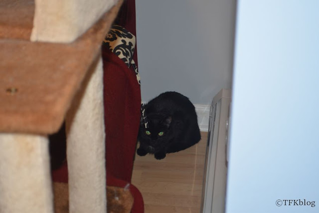 small black cat hiding beside the couch