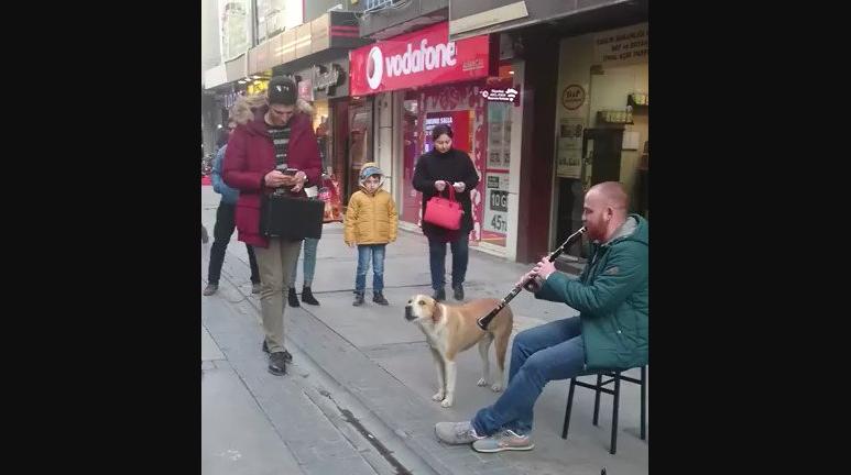 Anjing Ini Melolong Seperti Bernyanyi Mengikuti Irama Suling