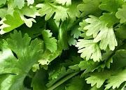 Bienfaits de la coriandre : fraîche, en graines, en poudre