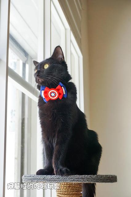 14608891 1099288046791106 5247301149025562253 o - 熱血採訪 朵貓貓咖啡館 - 貓咪餐廳