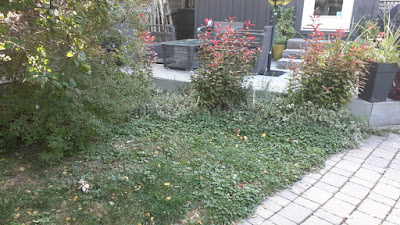 Dufferin Grove Toronto Garden Makeover Before by Paul Jung Gardening Services--a Toronto Gardening Services Company