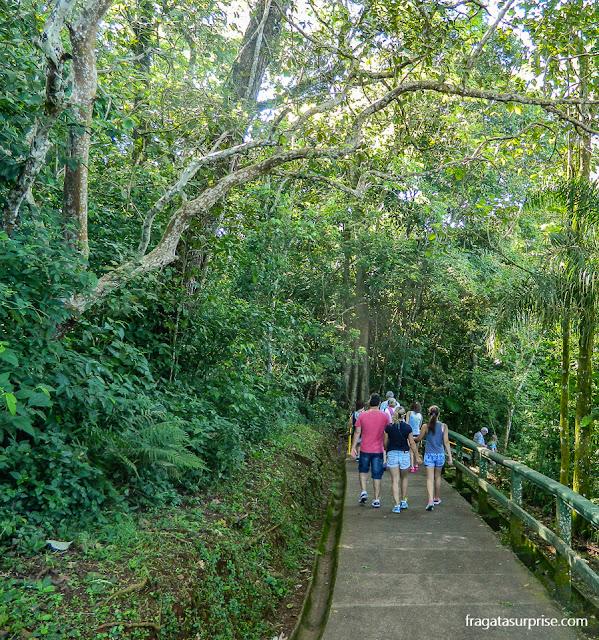 Trilha do circuito principal do Parque Nacional das Cataratas do Iguaçu