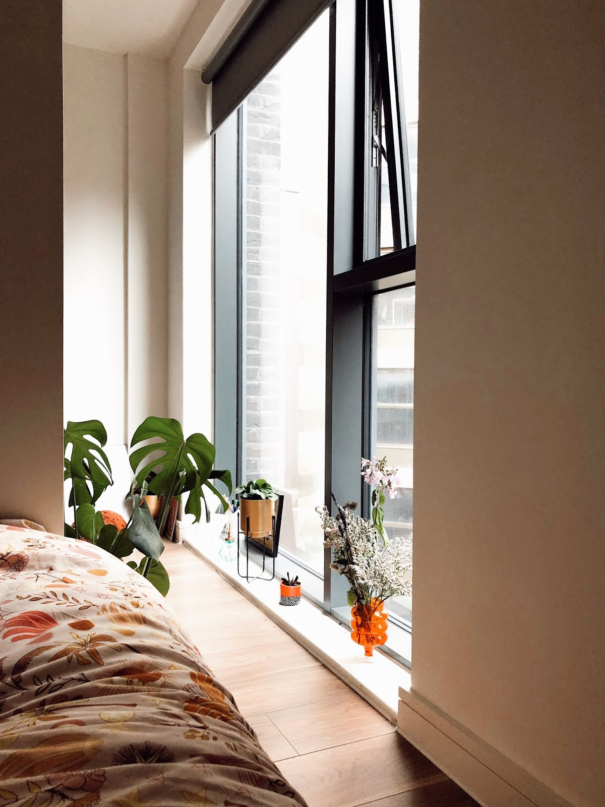 view looking out of window from bed in studio apartment with houseplants on window ledge
