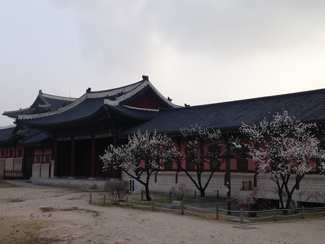 palace in seoul with cherry blossom trees
