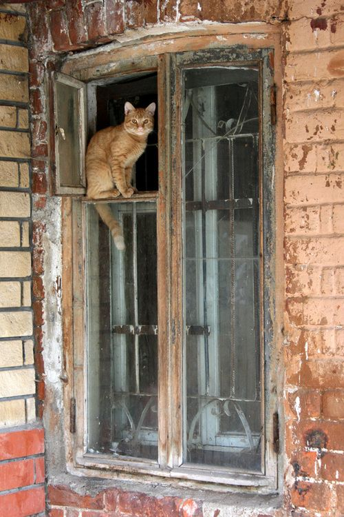 ♥ Cat in the window.