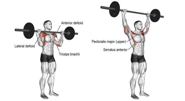 push barbell from behind the head