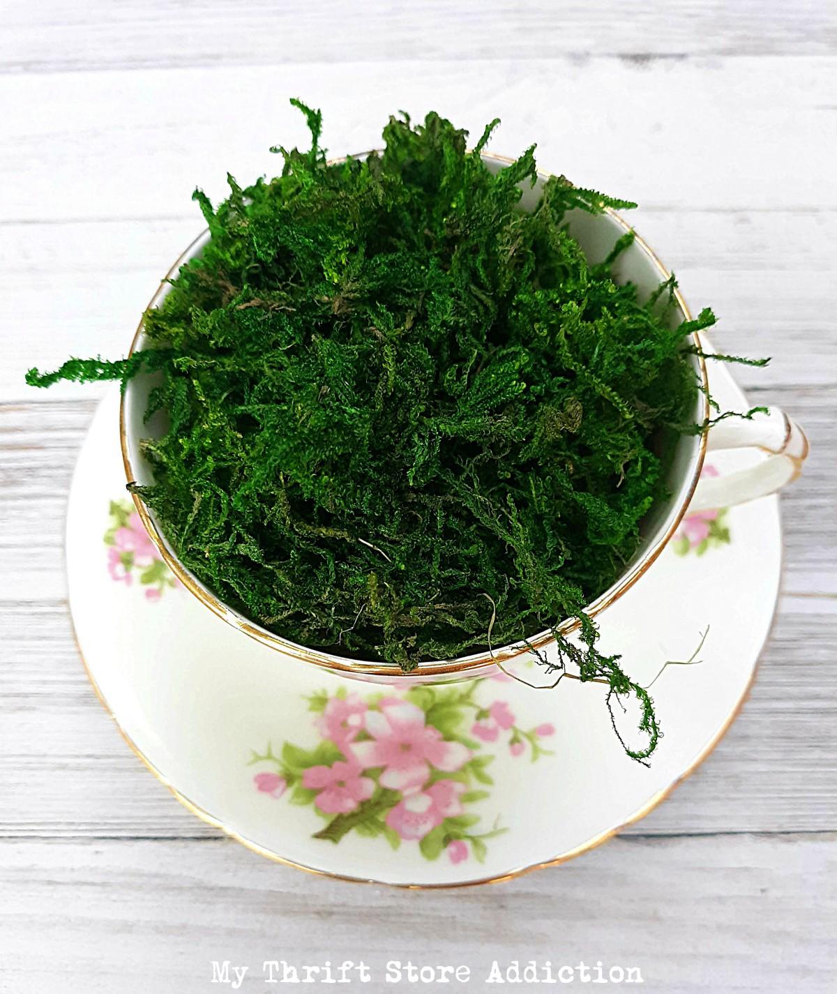 Prince Charming teacup garden