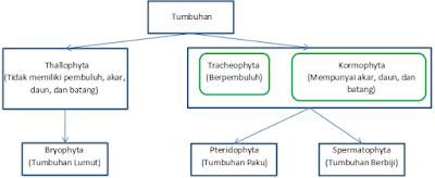 Klasifikasi Tumbuhan