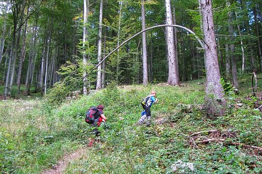 Szlak schodzi z bitej drogi do lasu