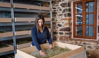 Η 26χρονη από τη Χίο που καλλιεργεί και εξάγει 14 είδη αρωματικών φυτών και βοτάνων