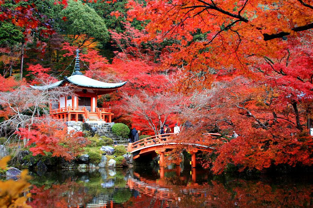 5 activités à voler au Japonais