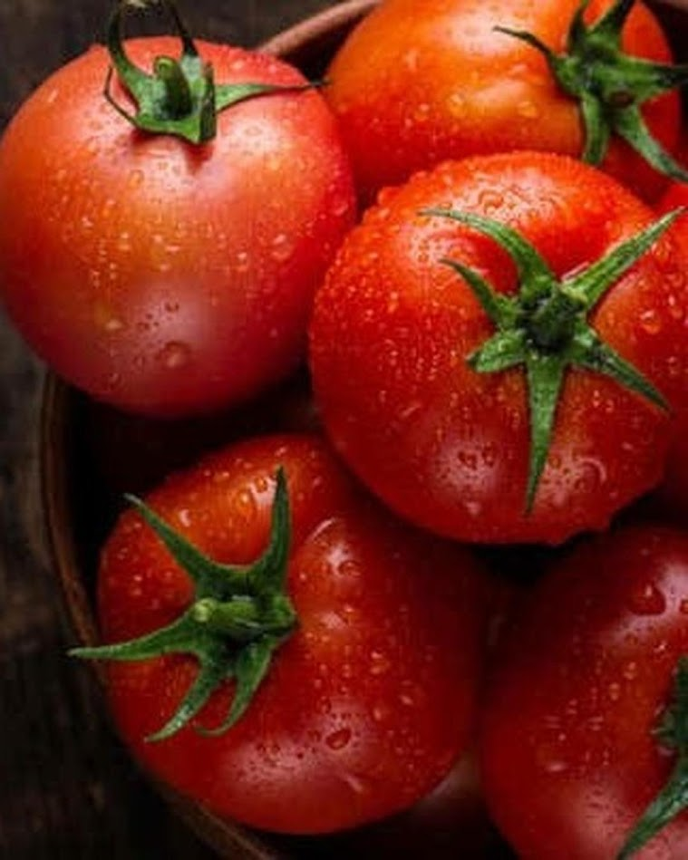 50 Biji Benih Bibit Tomat Merah Besar Big Red Tomato Banjarbaru