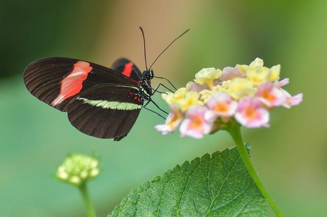 Gambar kupu kupu dan bunga tercantik