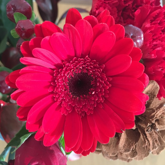 red-gerber-just-one-flower-from-the-Festivity-bouquet
