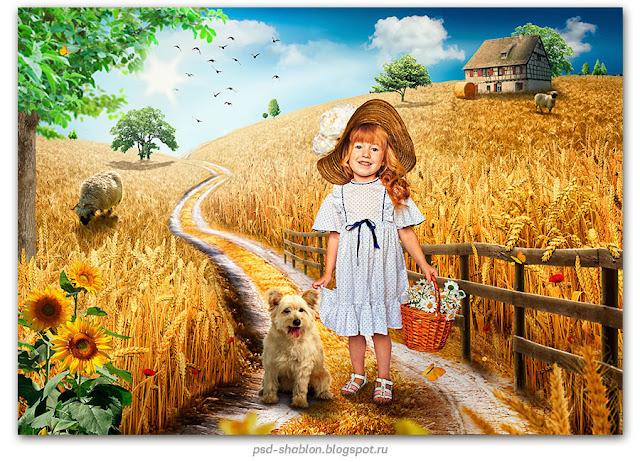 шаблон пшеничное поле