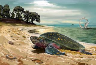 Archelon, la gigantesca tortuga prehistórica