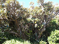 Stunted shrubs, Mount Taranaki trail, New Zealand