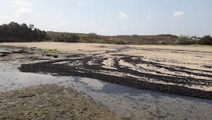 Pantai Hitam Akibat Tumpahan Batubara Yang Lambat Ditangani