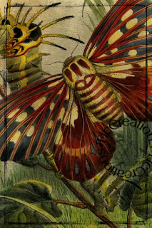 https://1.bp.blogspot.com/-nntbj_wBSh0/WsUvXuX60II/AAAAAAABLGg/hJrIsdd8avUMba63aZl-gEZi5bBtLacvwCLcBGAs/s320/BBBPrev4.jpg