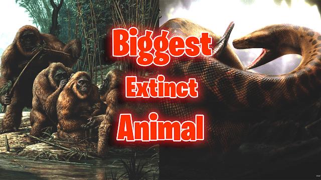 Biggest Extinct Animals On Earth