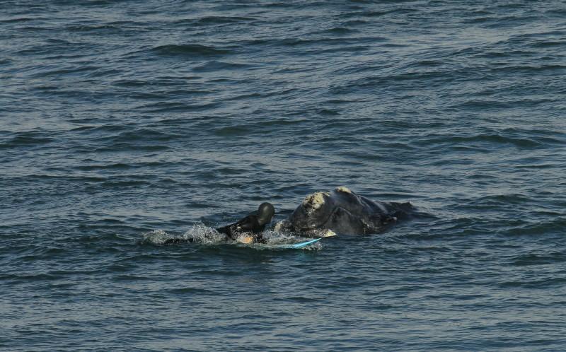 surfista ballena 01