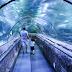 Daftar Harga Tiket Seaworld Ancol
