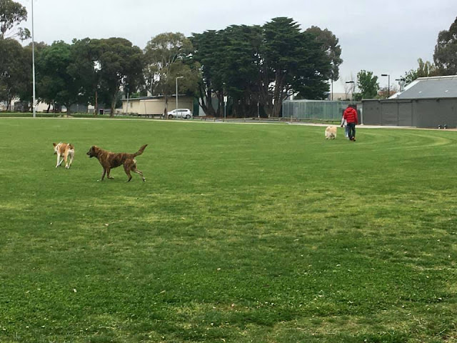 Hosken Reserve: grass oval used for soccer training, informal recreation, off-lead dog exercise