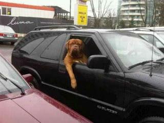 transporte cães gigantes