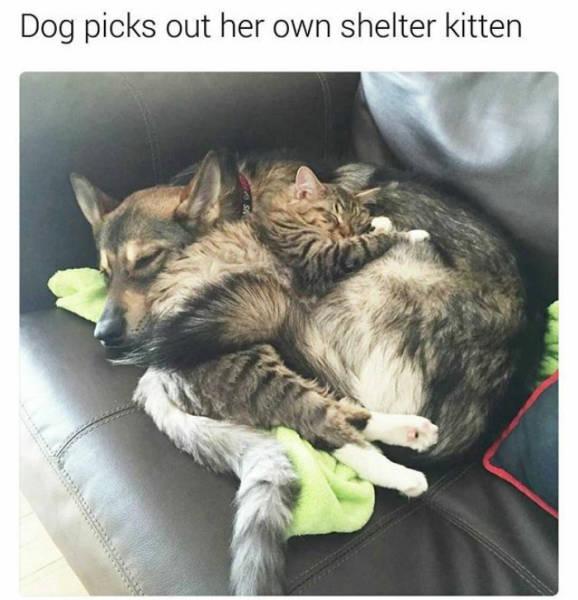 Dog picks out her own shelter kitten