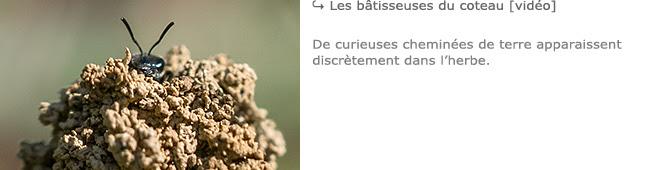 http://www.histoires-naturelles.fr/p/les-batisseuses-du-coteau.html