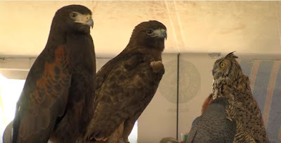 Video Screen Capture:  Raptors At The Arizona Game and Fish Department Outdoor Expo