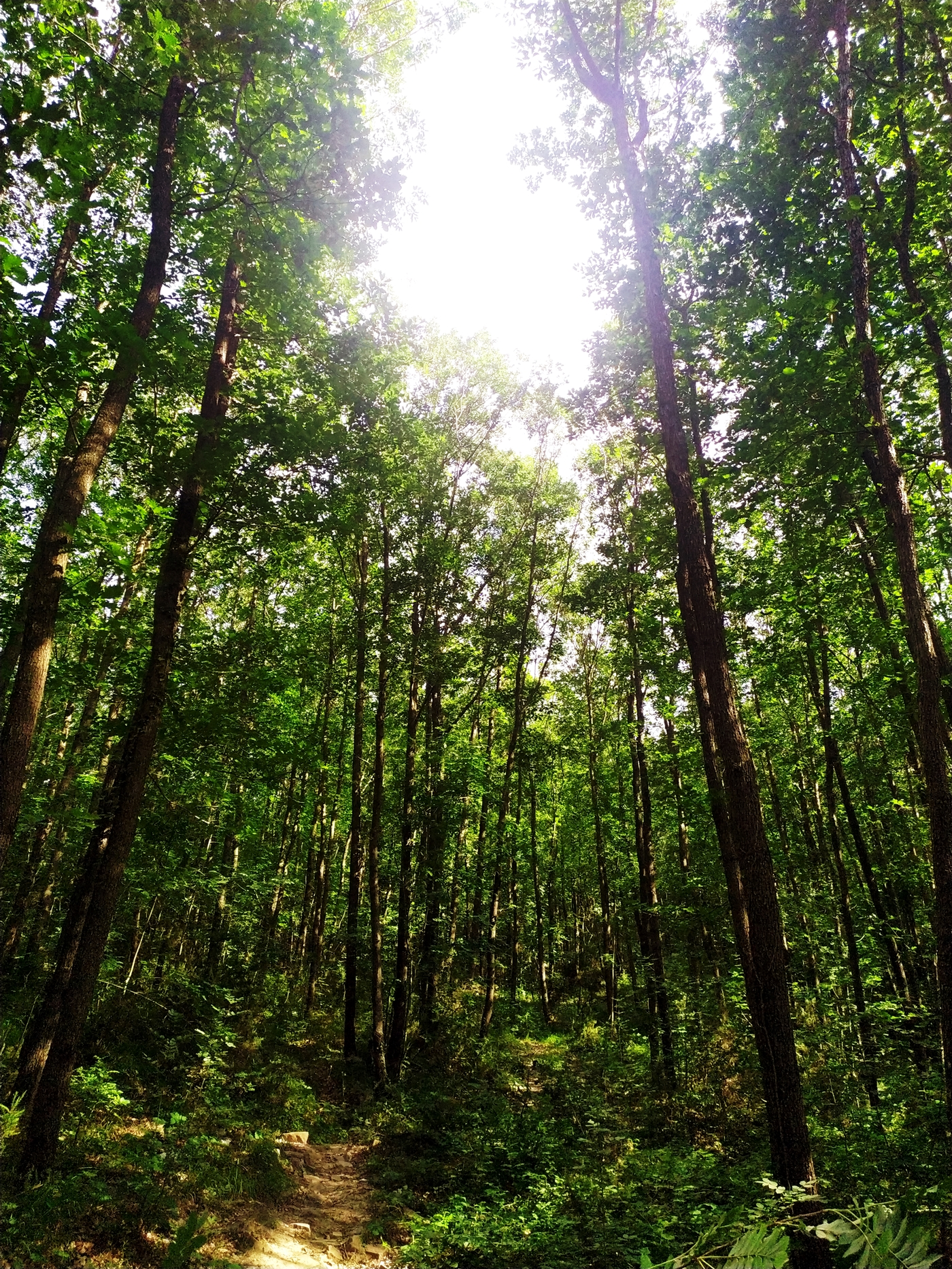 Forest, Tall Trees, Sunlight