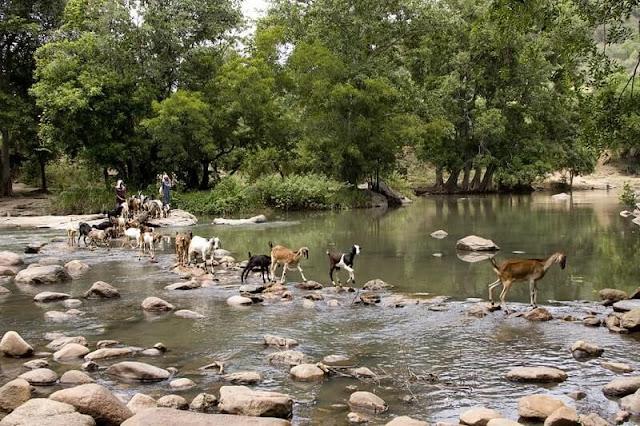 Chinnar Wildlife Sanctuary, Kerala Tourism