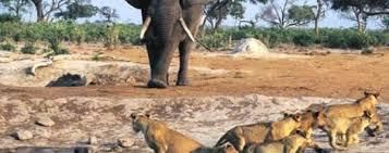 UN NOUVEAU DÉPART POUR LE PARC DU NIOKOLO-KOBA AU SENEGAL : Parc, animaux, visite, tourisme, sauvage, oiseaux, LEUKSENEGAL, Dakar, Sénégal, Afrique